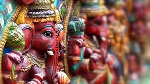 India: Snake Photography Tour with David Plummer