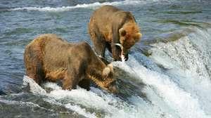 ALASKA - Ultimate Alaska Wildlife