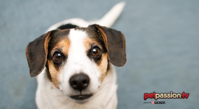 Scodinzolio Del Cane Attenti Alla Direzione Petpassion