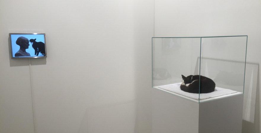 LUZIA HÜRZELER Let Sleeping Dogs Lie (2016) at Galerie Gisèle Linder (Basel) at Art Basel