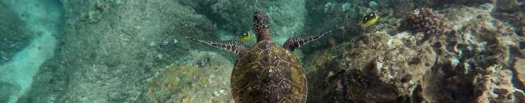 Our Daily Bread 23 January 2020 Devotional, Our Daily Bread 23 January 2020 Devotional – Waiting with the Turtle