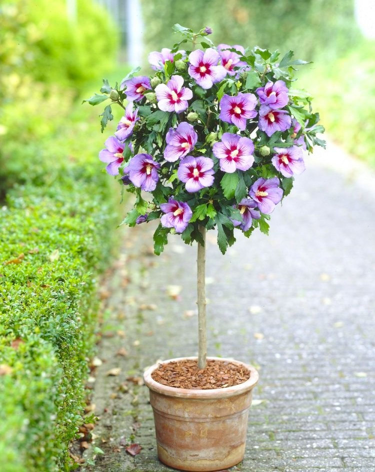 Unique Flower Planters