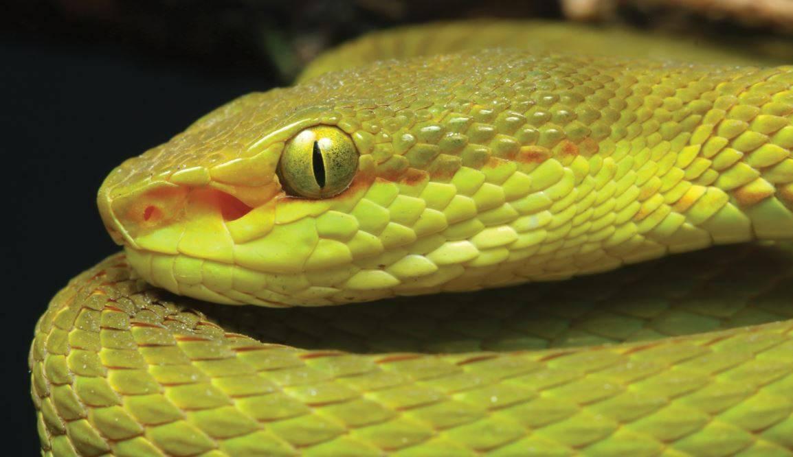 Cabeza de la serpiente de Salazar