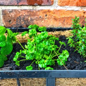 Herb Garden Window Box