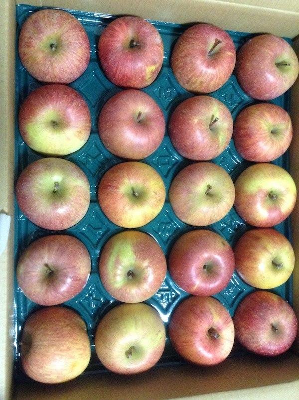 長野県中野市サンふじりんご加工用20kgは生食でも美味しいしおすすめ