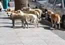 المركز المصري يقيم دعوى لمنع استخدام الاستركينين في قتل الكلاب الضالة.. من أخطر 10 سموم في العالم ومحظور في أغلب الدول