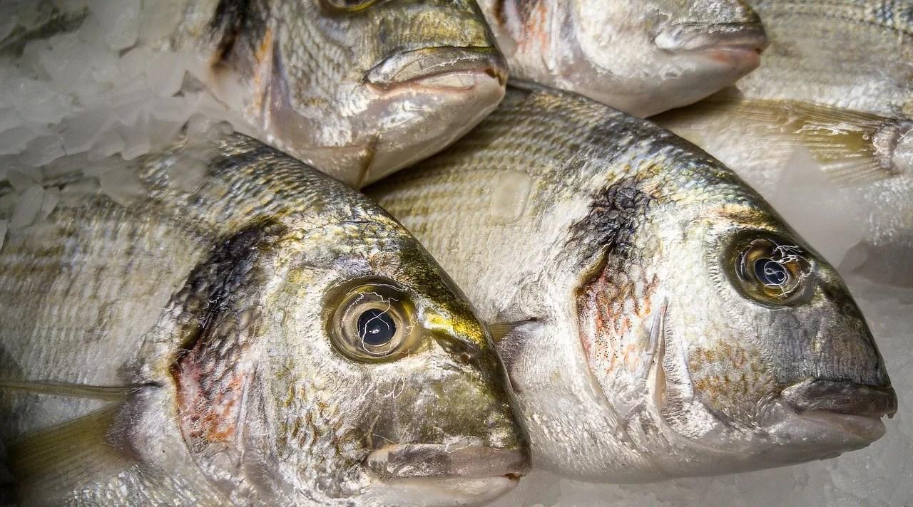 Brexit : un privilège datant de 1666 pourrait bien sauver les pêcheurs flamands
