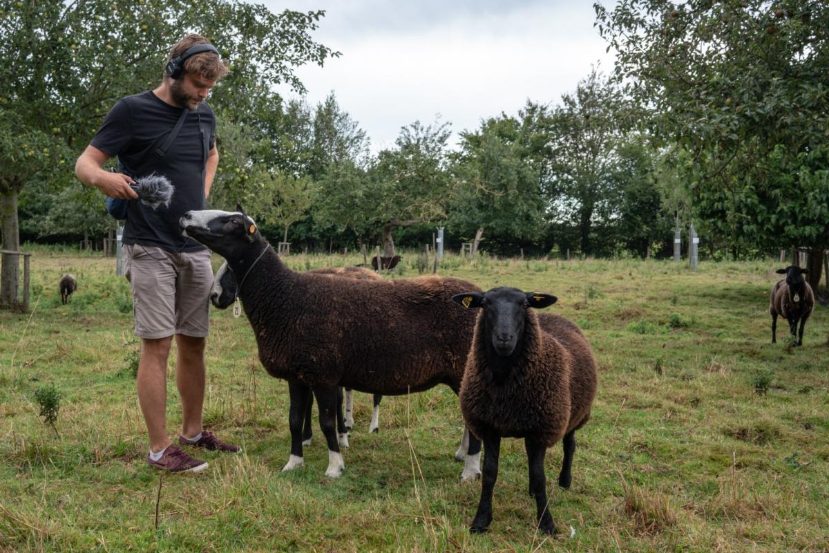 Les moutons noirs de Beauvoorde