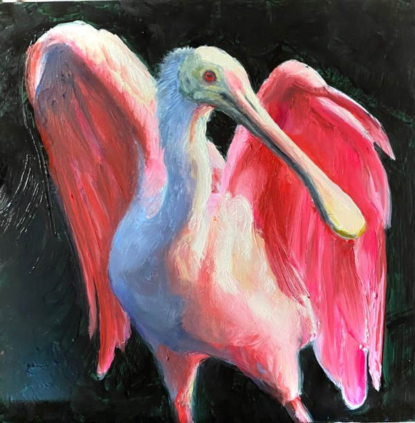 oil painting of a roseate spoonbill with wings spread by martha dodd