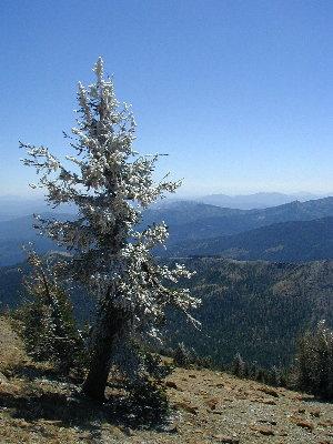A Cold Tree