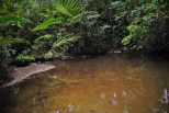 Biodiversity expedition in Maharlika
