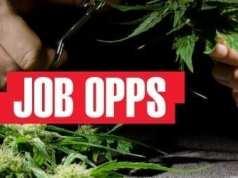 Marijuana Job Opportunities