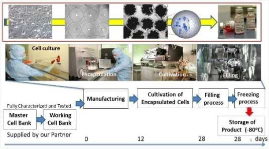 The Pharmacyte Biotech Cell Encapsulation Process