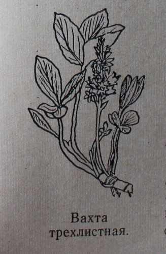 Ядовитые растения удмуртии фото и название