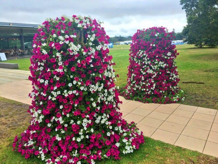 оформление клумб из петуний в саду фото и примеры красивые