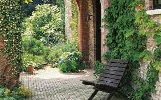 Вьющиеся многолетники для сада и дачи: фото и названия ...