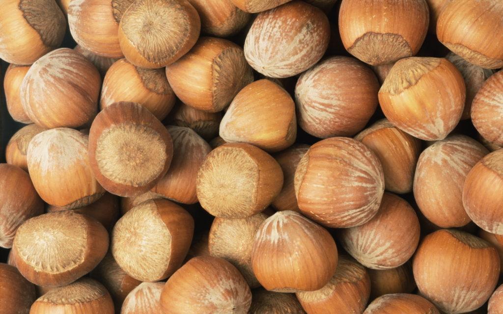 На какой год плодоносит орешник. На какой год плодоносит фундук после посадки