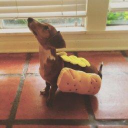 hot dog costumes dachshunds