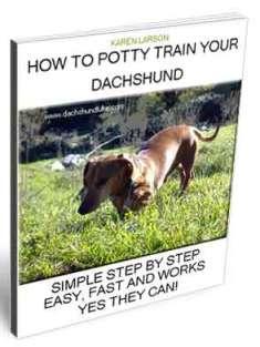 How To Potty Train A Dachshund