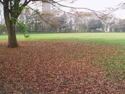 村上緑地公園にて 2003年秋