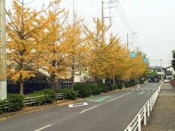 紅葉はじまる街路樹