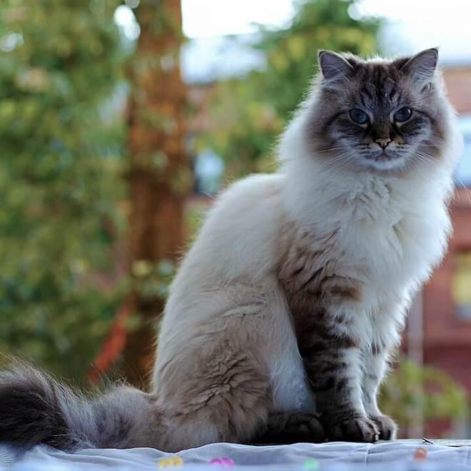 cat-orig-720x720