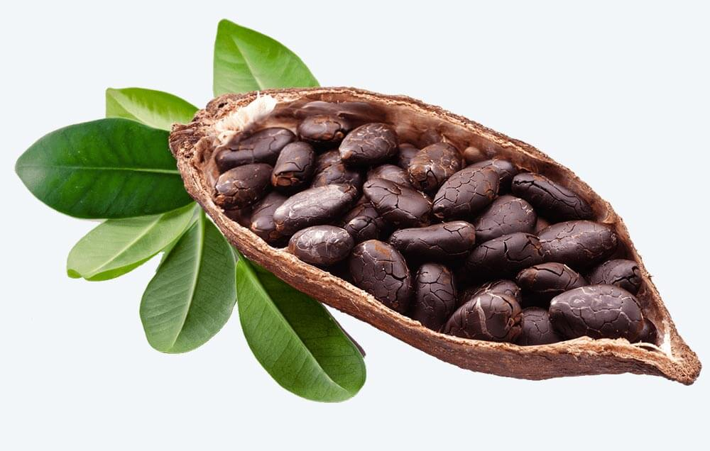 Cocoa-pod-compressed