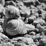Snail Racing: Grab some volunteer racers from the garden, build yourself a racecourse and put your bets on. On your marks…
