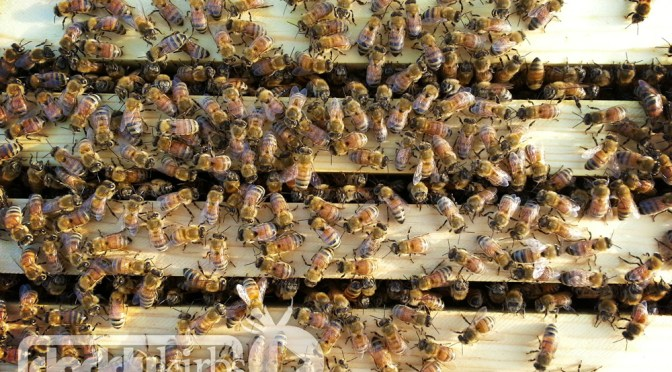 Beekeeping: First Year Frustrations