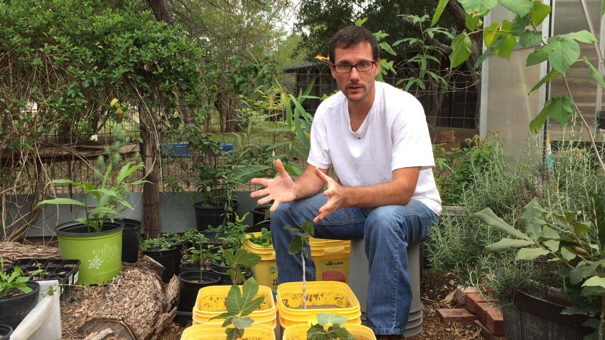 Propagate Fig Trees: How To and Why
