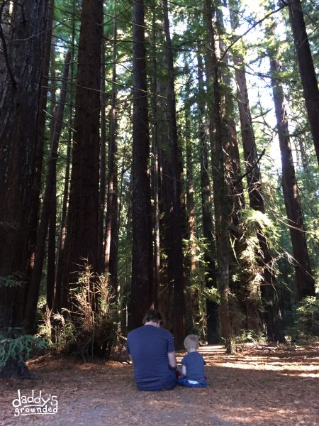 Father & Son in the Redwoods