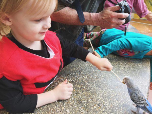 daddysgrounded_brookfieldzoo_feedbird