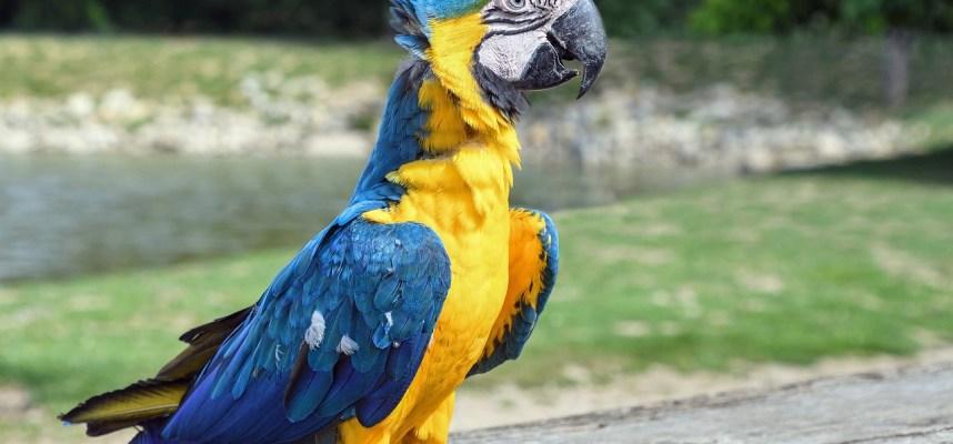 Parrot-DPC