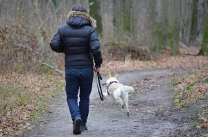 Will dog walking