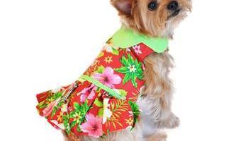 7dce2695d181 Red Hawaiian Hibiscus Designer Dog Harness Dress – Daddy's PetCare