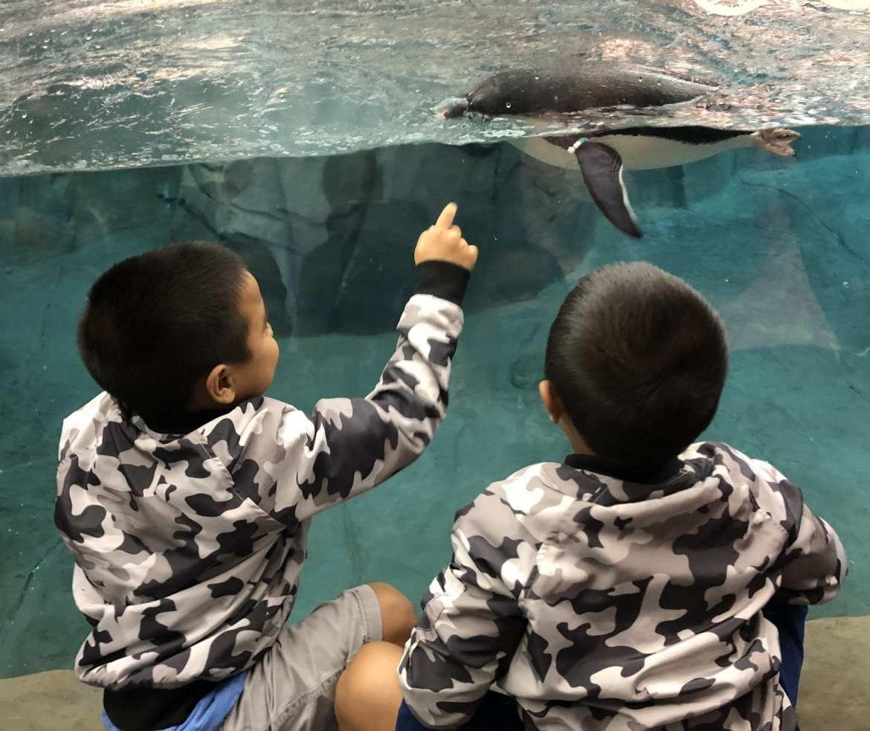 Reader Success Tales: Seeing the world through my children's eyes