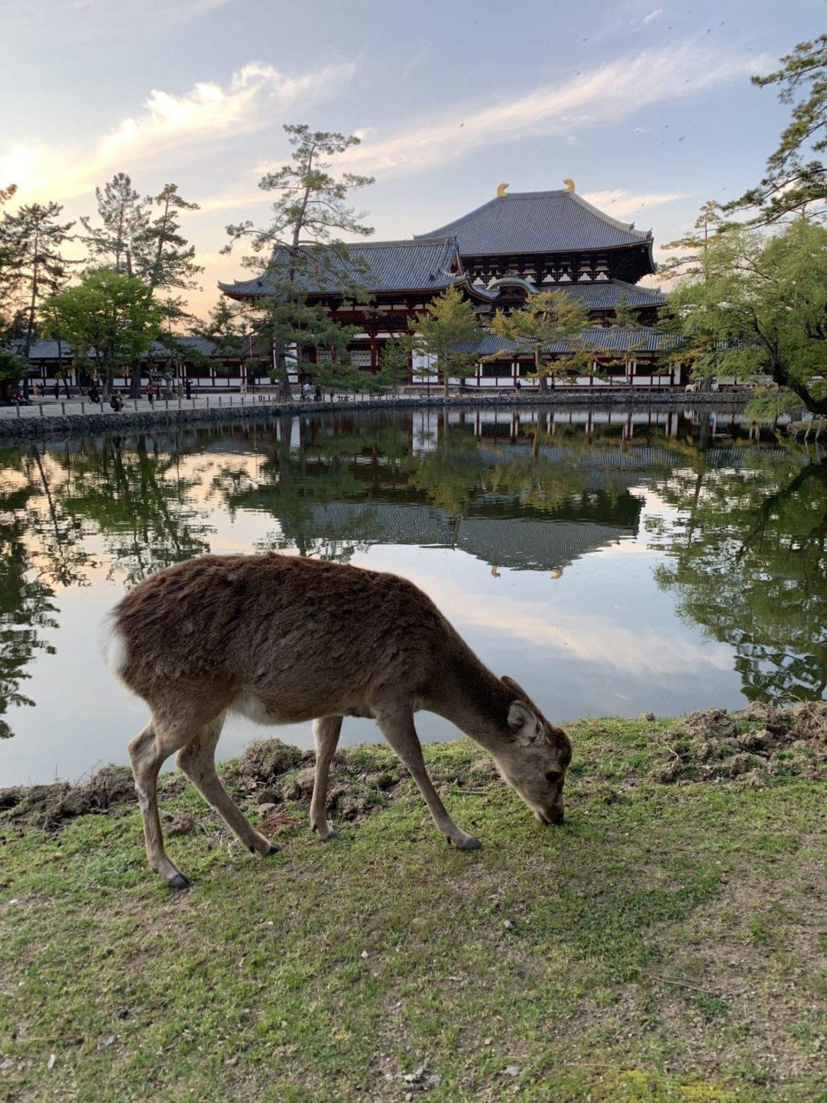 Visiting Nara – a perfect day trip from Kyoto