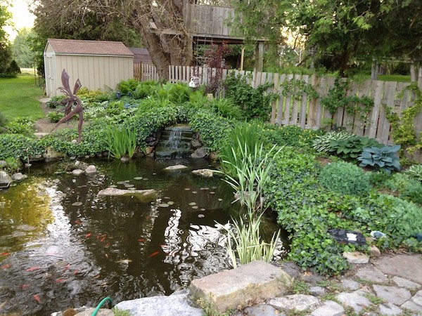 Pond for kids with fish in backyard