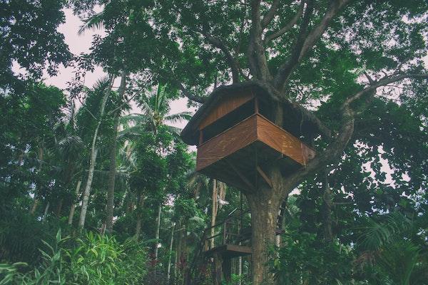 Treehouse in a backyard