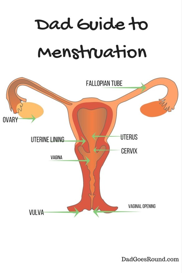 Dad Guide to Menstruation | Dad Goes Round | The first in a series for dads of daughters. This one covers the basics of the menstrual cycle.