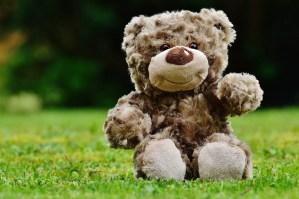 Teddy sitting on grass