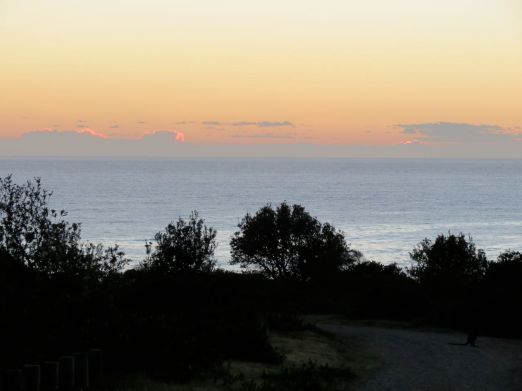 kangaroos in the dark as dawn glows