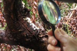 using a magnifying glass to see the tiny pores