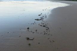 dead plague soldier beetles at wave's edge