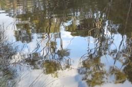 rippling trees