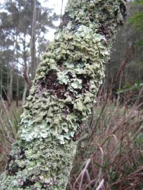 lichens love this weather