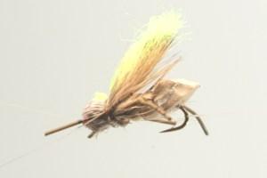 BC Hopper 1
