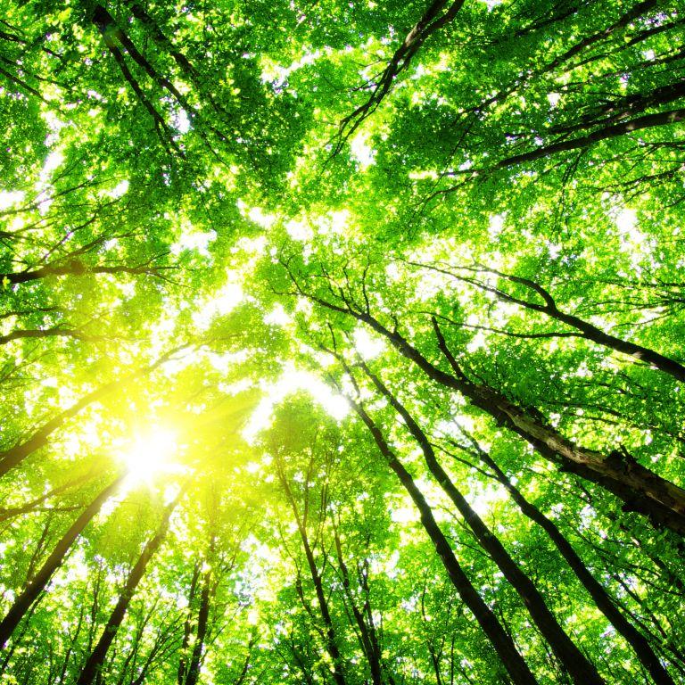 Career Coaching: Sustainability