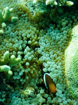 Diving, Sunda Islands