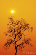 Sunset-Tree, Mekong River